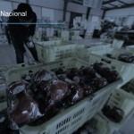 México exporta más frutas y verduras, pero sigue importando maíz, leche y carne